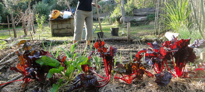 4 modules de formation au jardinage programmés au Rossignol.