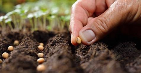 Jeudi 16/07 à la Ferme Nos Pilifs : atelier d'approche de la permaculture