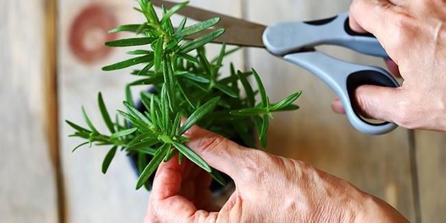 Samedi 25/09 : Atelier d'éco-jardinage aux Pilifs : Le bouturage.